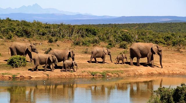 Moudrý a velkolepý slon
