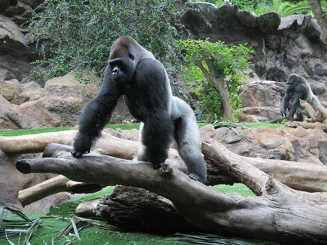 primát